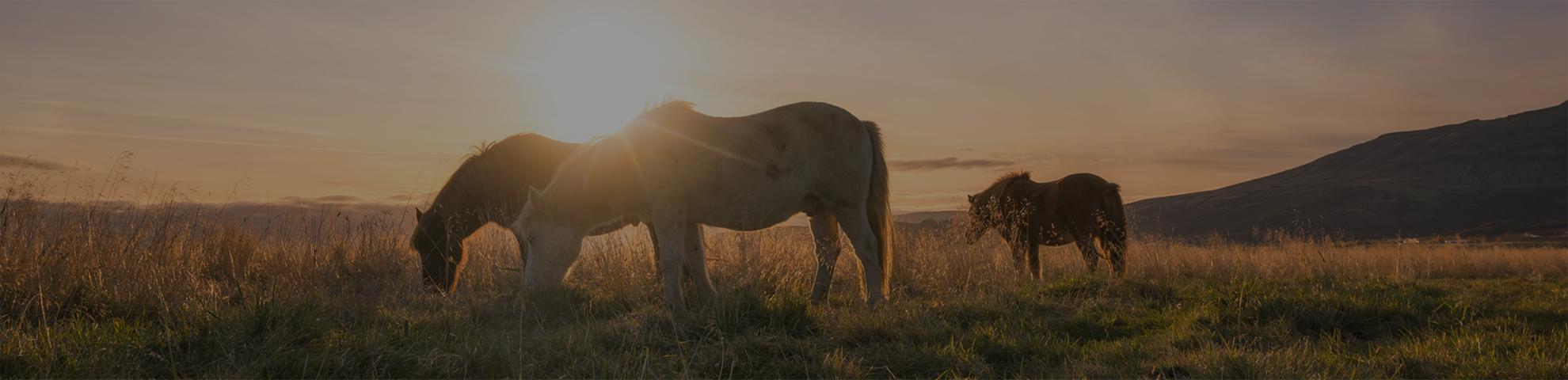 cheval en liberte